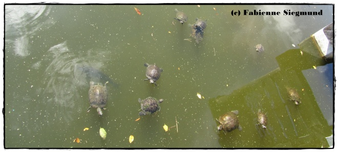 Sommerkuss-Blogtour Turtle Ponds.
