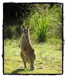 Regina Gärtner Blogtour 2 - Känguru